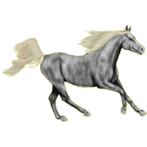 Reitpferd Isländer Mausgrau
