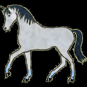Pegasus-Reitpferd Berber Mausgrau