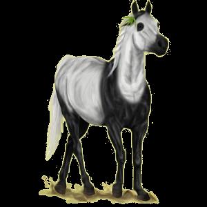Pegasus-Reitpferd Andalusier Apfelschimmel