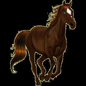 Pony Deutsches Reitpony Rappe