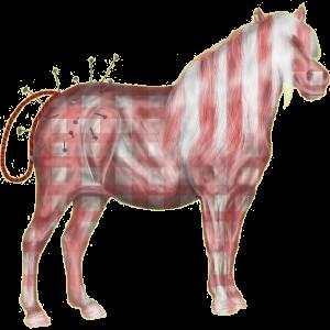 Pony Quarter Pony Forellenschimmel