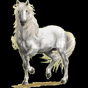 Reitpferd Andalusier Hellgrau