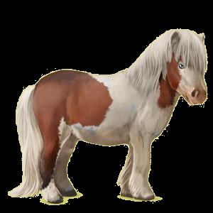 Pony Shetlandpony Hellgrau