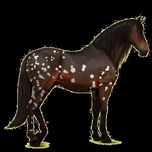 Reitpferd Andalusier Mausgrau