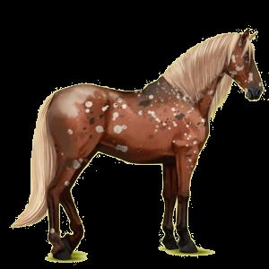 Reitpferd Andalusier Falbe