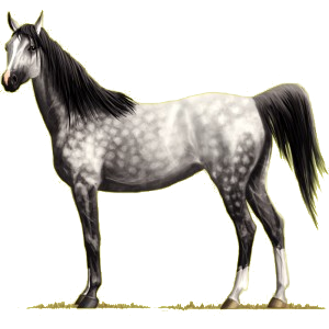 Pegasus-Reitpferd Araber Forellenschimmel