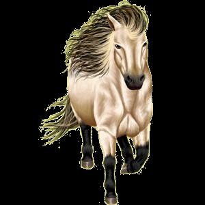 Pony Deutsches Reitpony Brauner
