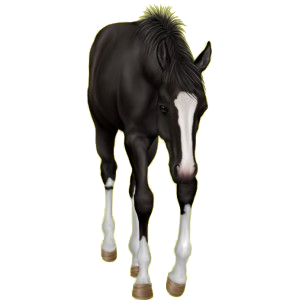 Pony Welsh Cob Palomino