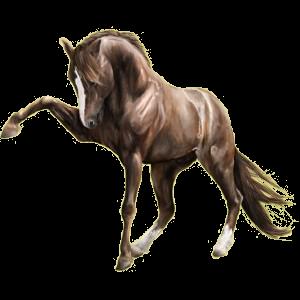 Pegasus-Reitpferd Marwari Dunkelbrauner
