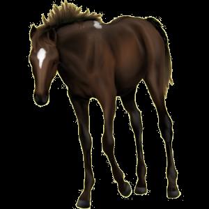 Pony Neufundland Pony Mausgrau