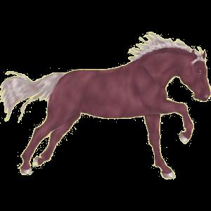 Pegasus-Reitpferd Trakehner Rotbrauner