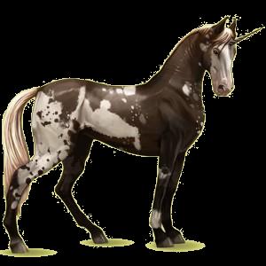 Einhorn-Reitpferd Marwari Dunkelbrauner
