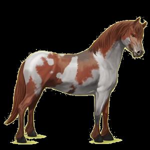 Pony Quarter Pony Fuchs mit Tobiano-Scheckung
