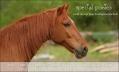 special ponies