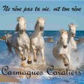 camargues cavaliers