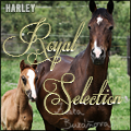 royal selection