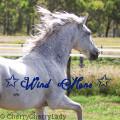 ✩ wind mane ✩