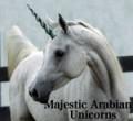 majestic arabian unicorns
