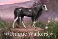 ∞unique walkers∞