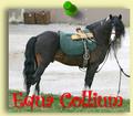 equa collium