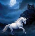 corona unicorns