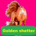 golden shetter