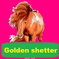 golden shetter