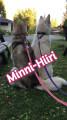 minni-hiiri