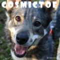 cosmictoe