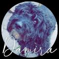 damira