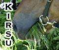 kirsu