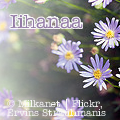 iihanaa