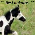 ˇˇ~best nokotas~ˇˇ