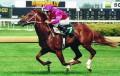 speeding horses ♥