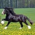 cheval au renaissance