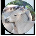 matolcsi's donkey ranch