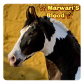 marwari's blood