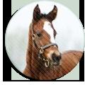 《american paint horse》
