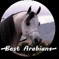 ~best arabians~