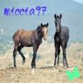 miccia97
