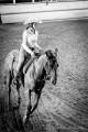 camy_horse