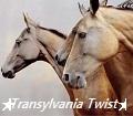 ★ transylvania twist ★