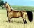 i cavalli celesti