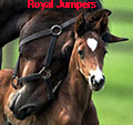 ╰★╮royal jumpers╰★╮