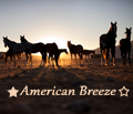 ★ american breeze ☆