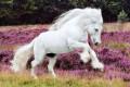 beauty of percheron