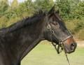 hästtjejen31