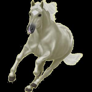 Ponny Welshponny Avblekbar skimmel