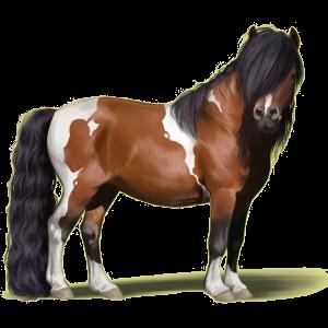 Ponny Welshponny Gulbrun