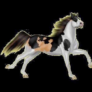 Ridhäst Renrasig spansk häst Svart